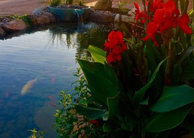 Koi Pond at Sunset With Flowers