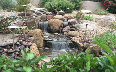 Plan Your Pond